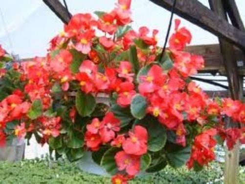 Plantas Colgantes De Sombra