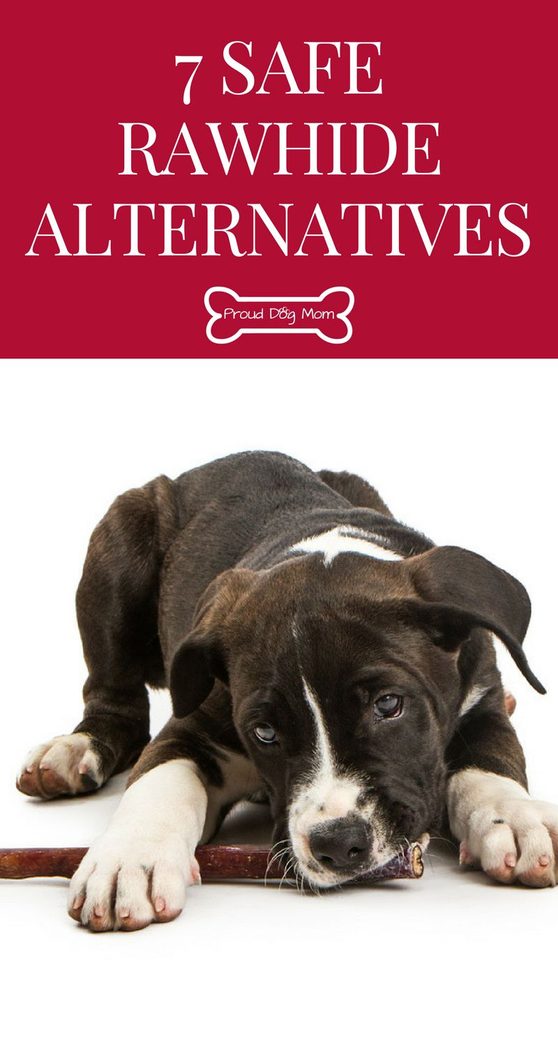 Ask The Experts 7 Safe Rawhide Alternatives Dog Toys Puppy