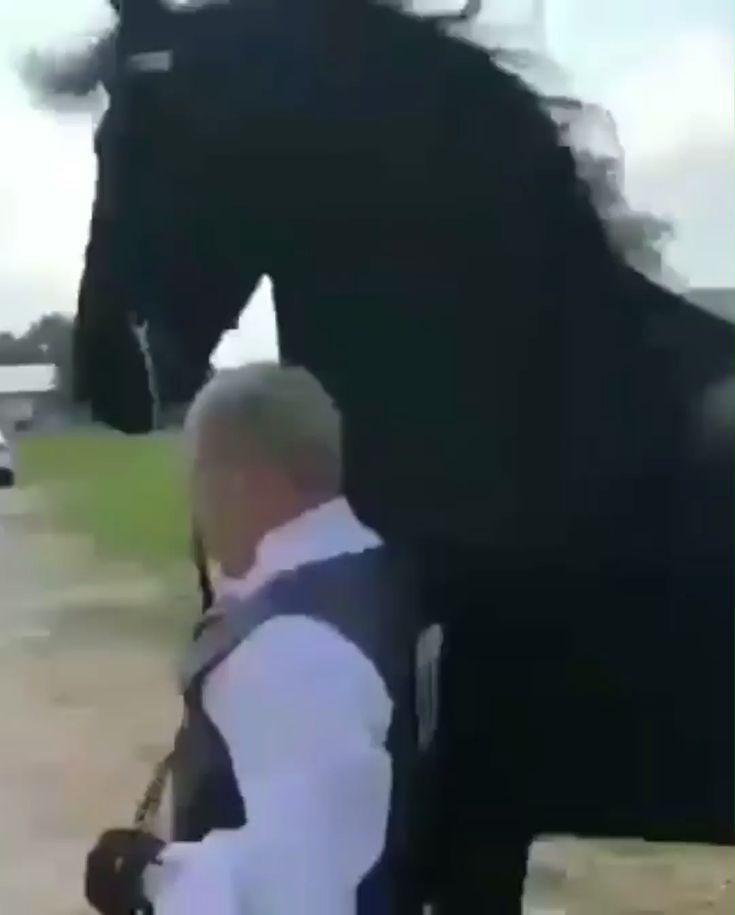 Beautiful! 😍   - Pferde - #Beautiful #Pferde