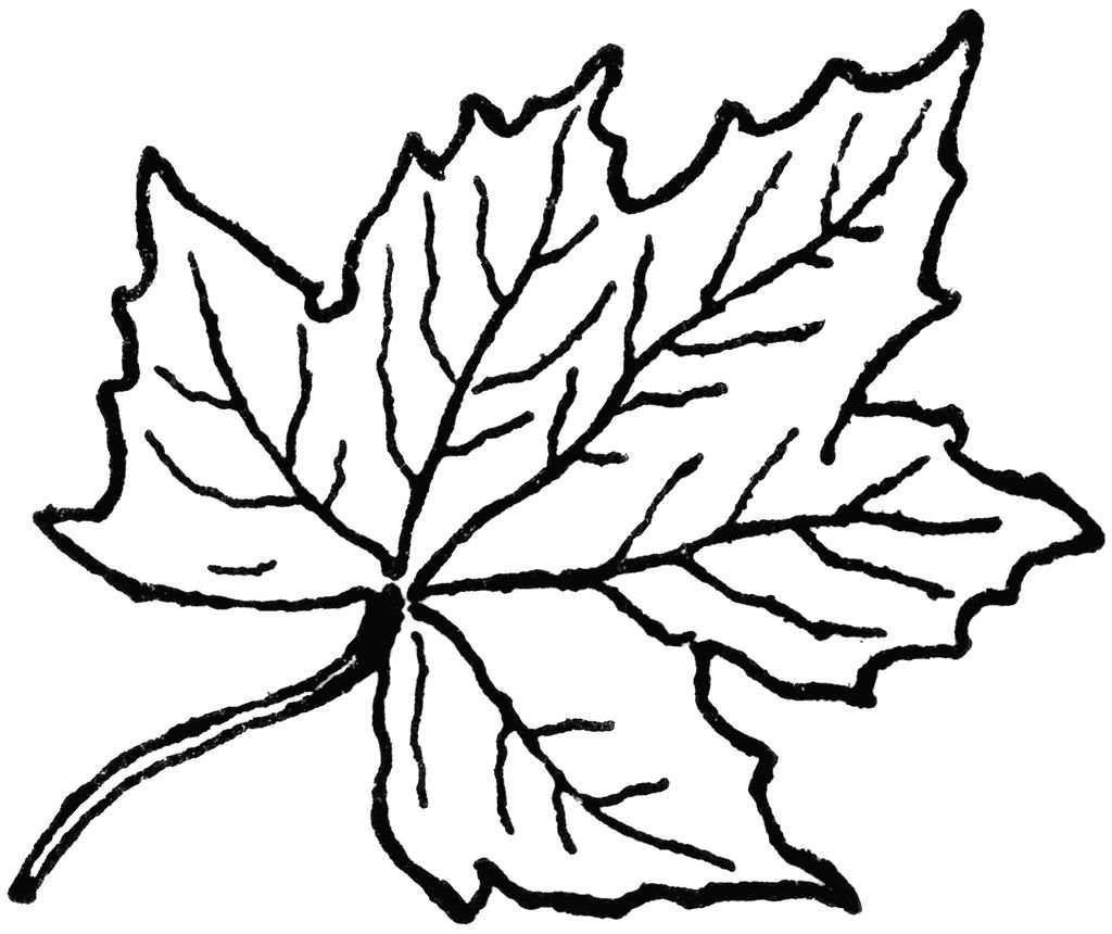 Leaf Coloring Pages Maple Leaves Clipart Panda Free Images