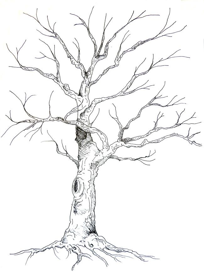 Guestbook Tree Anne Herbst Kresba Tuzkou Pencil Sketch Pencil