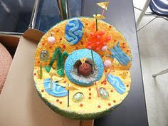 Animal cell school project ideas httpbiologycornerworksheets animal cell model ideas cake cookies pizza how to make it publicscrutiny Image collections