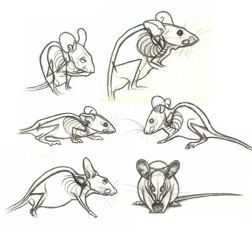 себя доме рисунки животных крысы это объемная