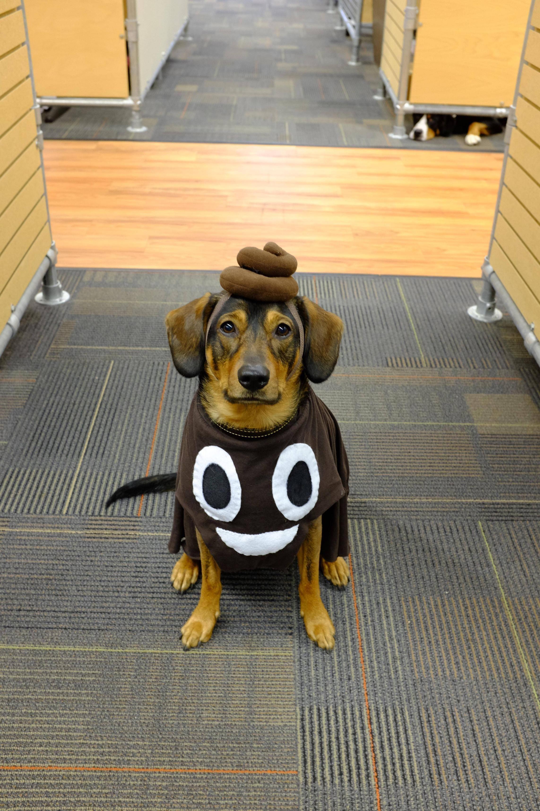 The poop emoji the best dog halloween costume iuve done yet