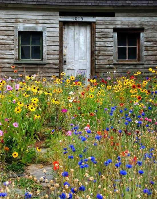 Old Forgotten Cottage Surrounded By Beautiful Wildflowers Whimsical Raindrop Cottage Cottage Garden Wildflower Garden Wild Flowers