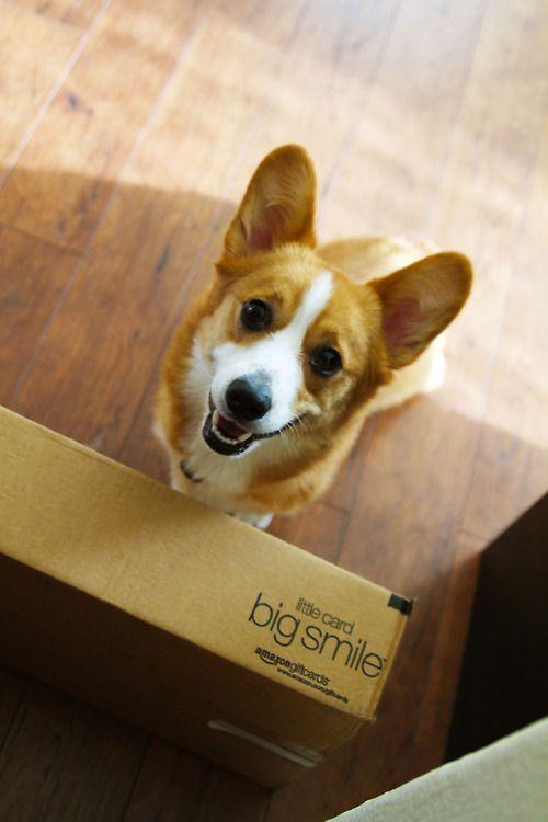 Corgi Big Smile Send Me One Too With Images Corgi Dog Cute