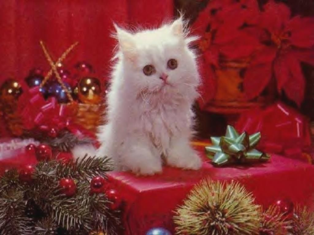 Fete Noel Gratuits La Fete De Noel Feter Noel Carte De Noel Neige Pour Noel Chaton De Noel Animaux De Noel Chats Et Chatons