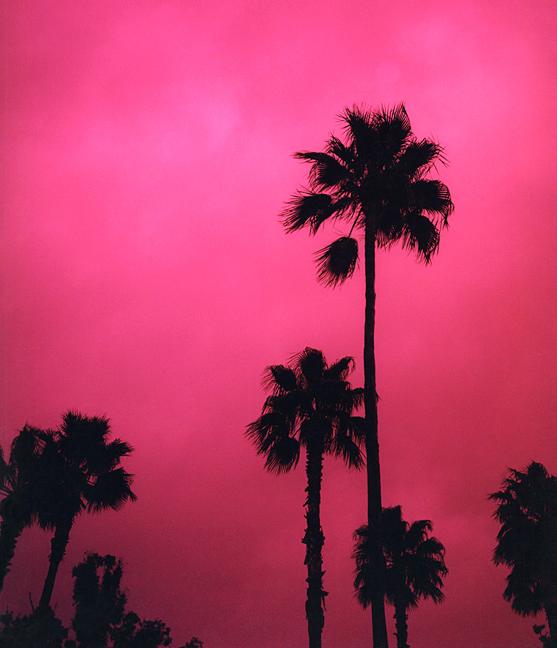 palmtrees on pink sky, palmiers noirs sur ciel rose