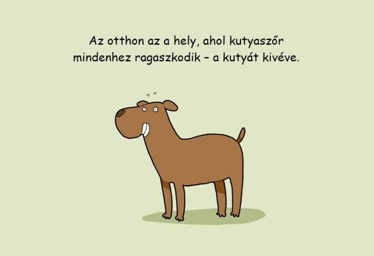 fogyni kisállat)