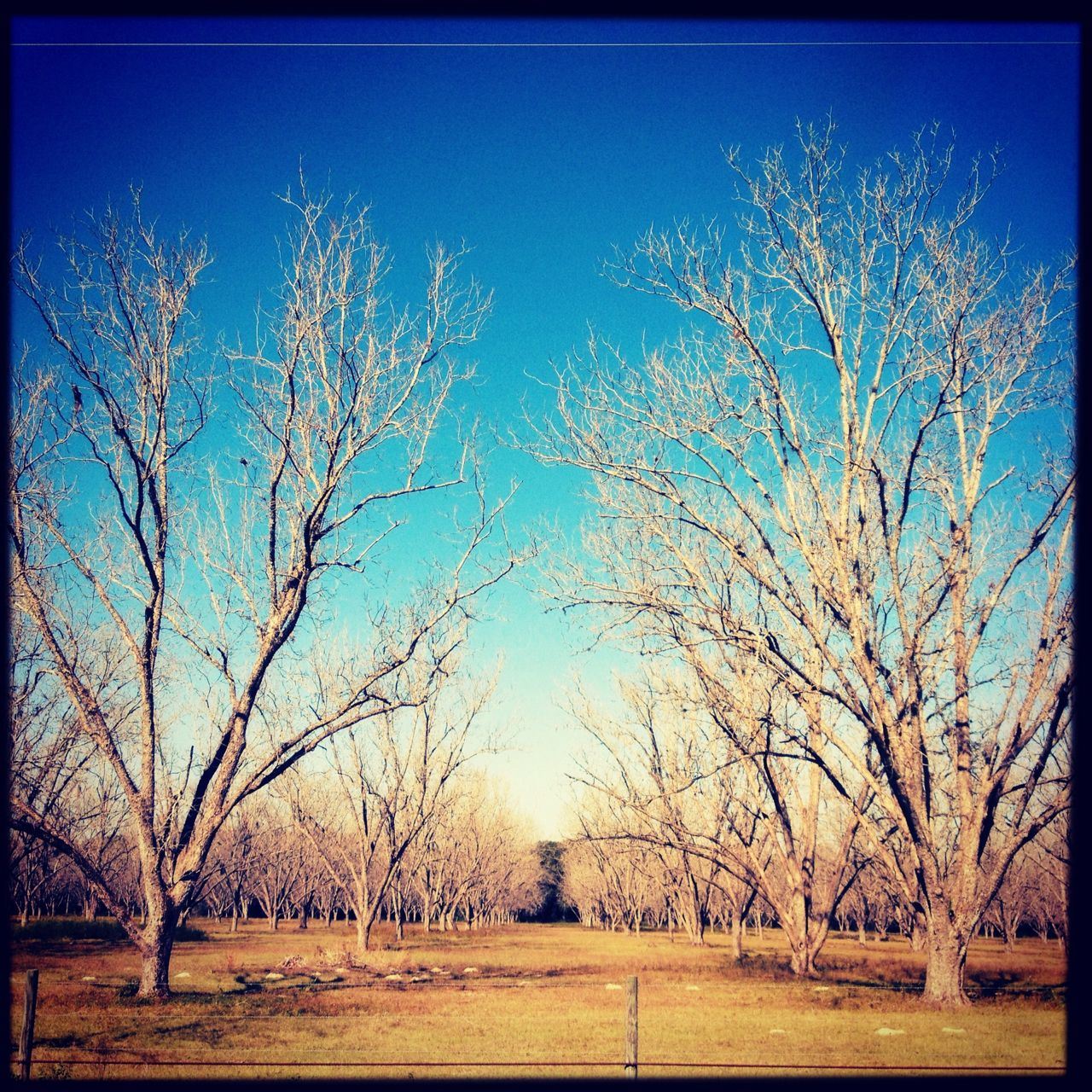 #trees #photography