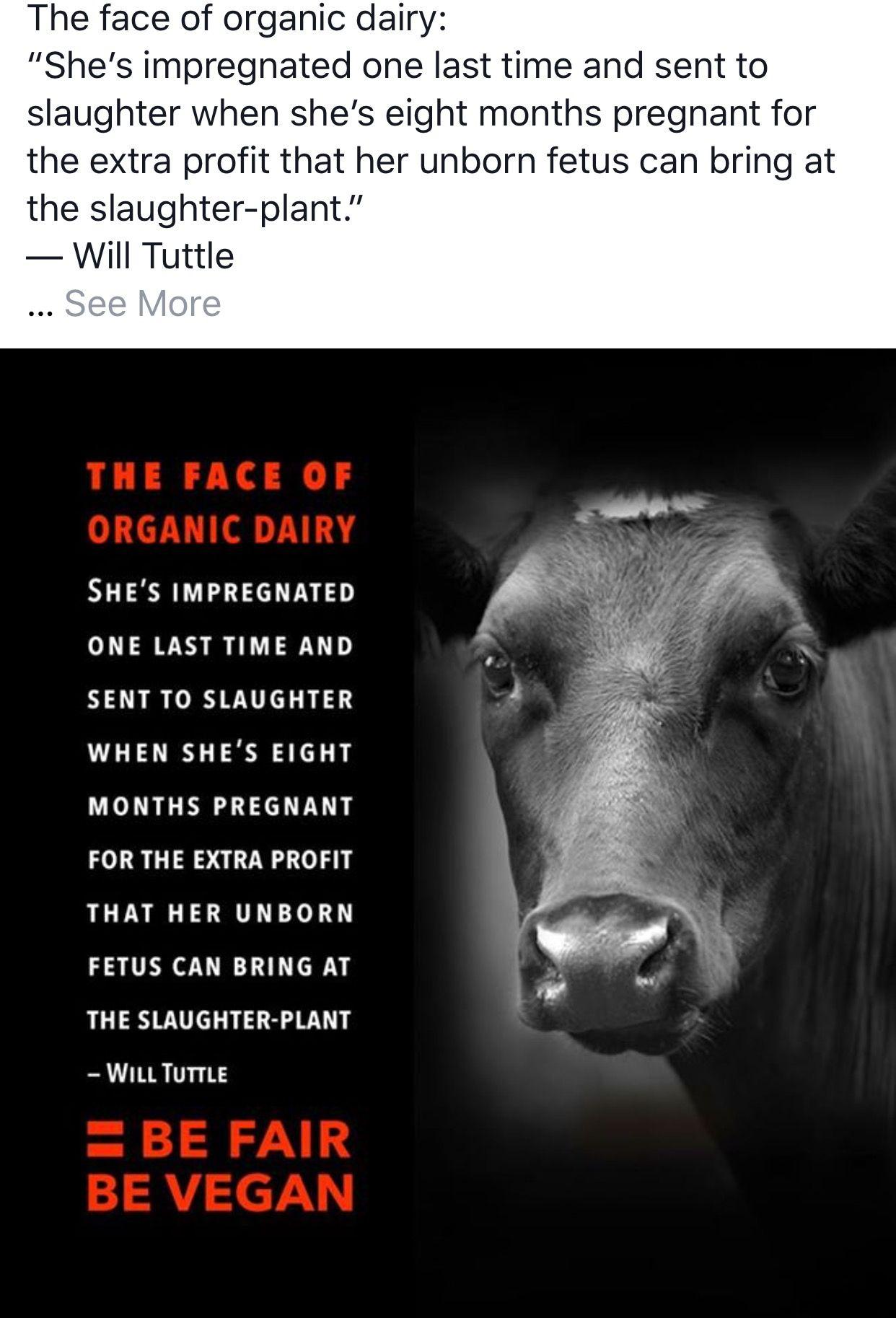 Animal Rights Quotes Pinmargaret Strong On Try Vegan  Pinterest  Vegans Animal