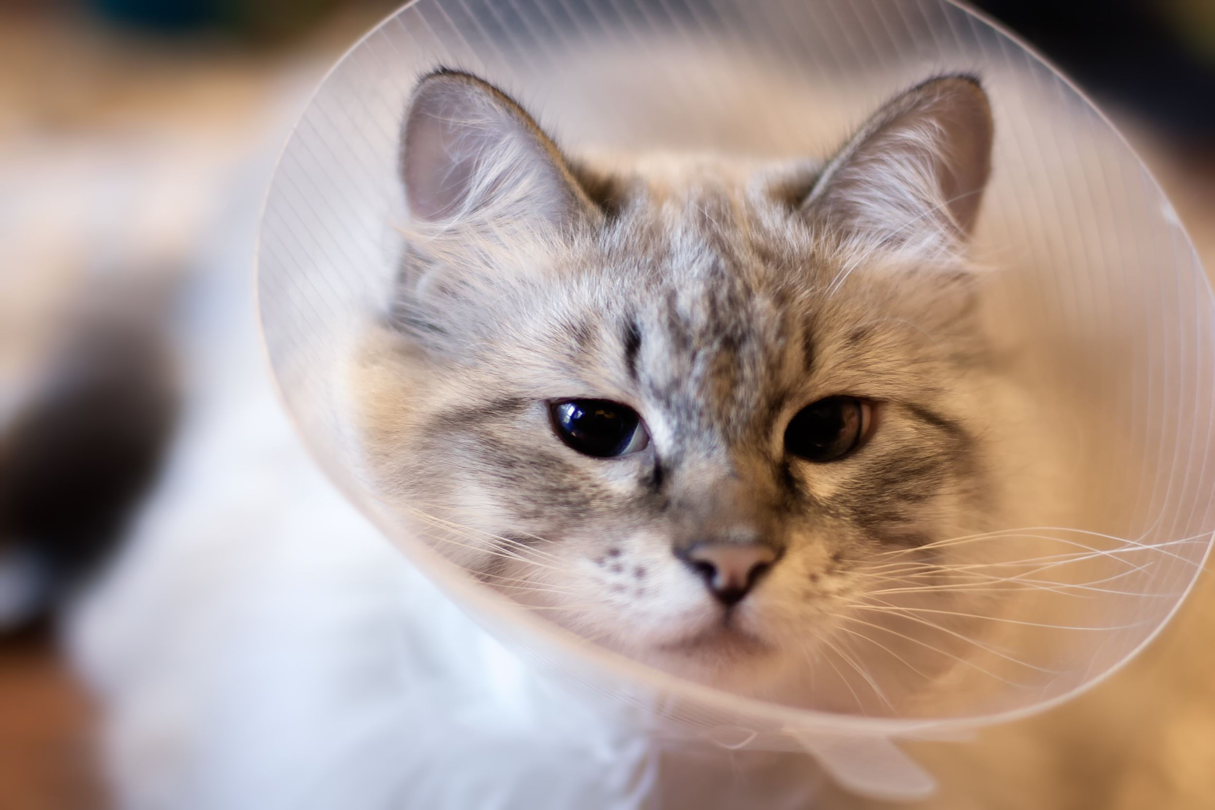 What Is the Difference Between Spaying & Neutering