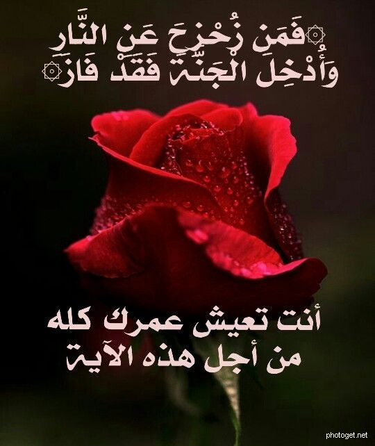 الجنة صور للفيس بوك Quran Verses Cool Words Life Facts