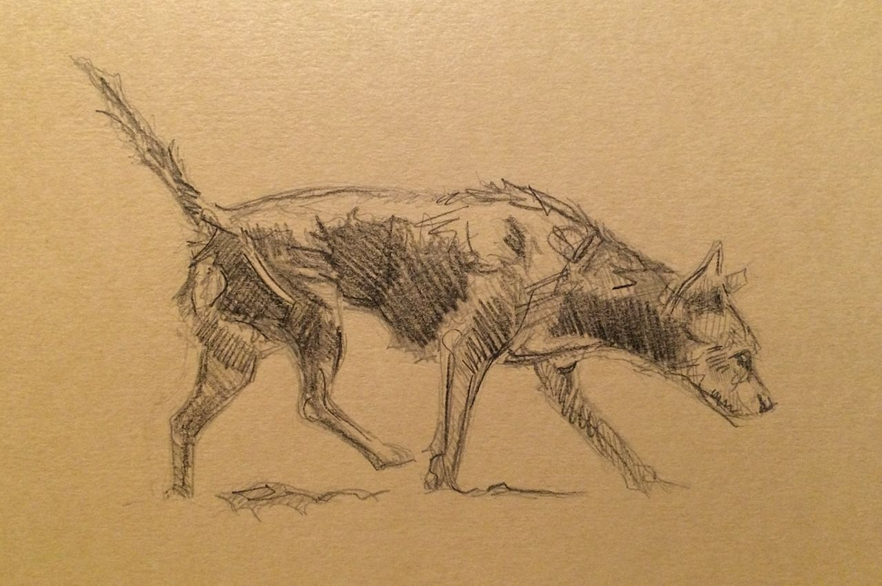 Day #67 - Graphite on card by Lucy Wilson, New Zealand…