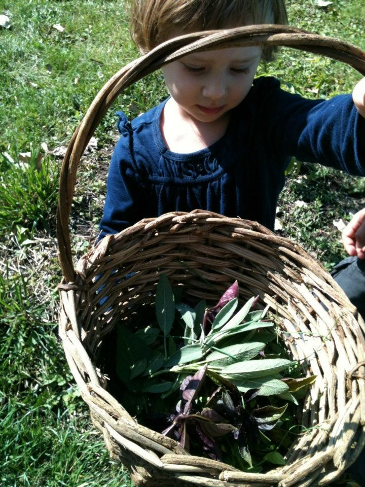 sage in wicker basket @ Green Apple Garden Playschool