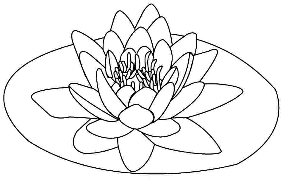 Floating lotus flower coloring pages coloringstar zen for Lotus flower coloring pages free