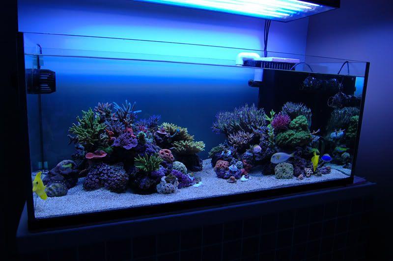 Minimalist Aquascape Opinions Pics Reef Central Online Community Aquascape Saltwater Tank Aquarium Fish Tank
