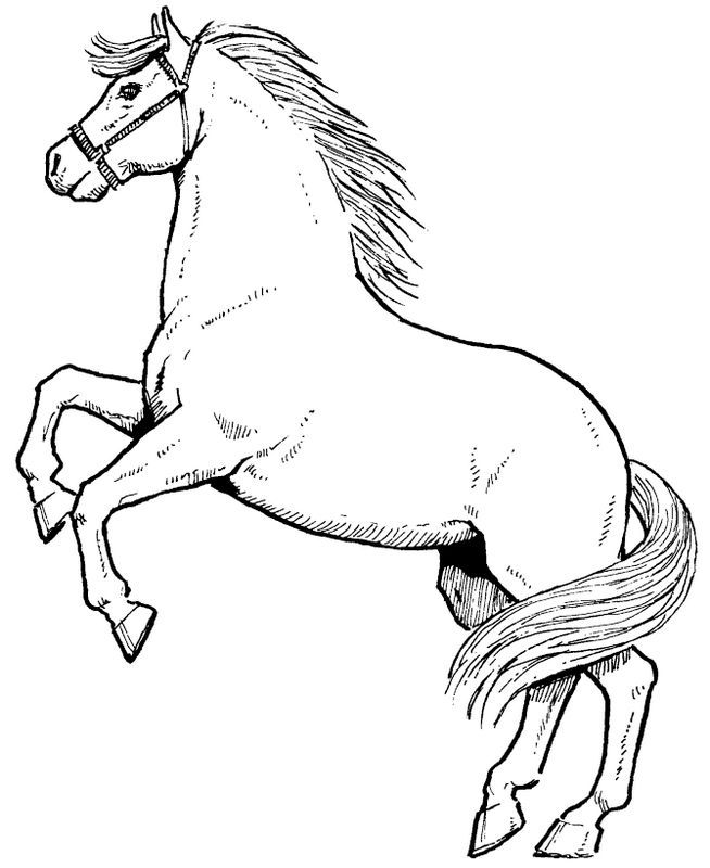 coloriage cheval qui se cabre imprimer | coloriage animaux | Pinterest