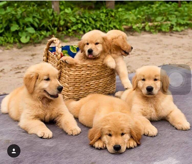 Puppies Dashing Dogs Cute Dogs Dogs Cute Puppies