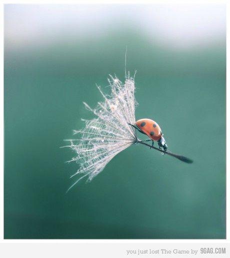 witch ladybug
