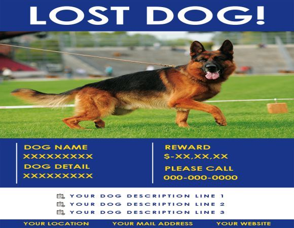 Found Dog Description Found Dog Flyer Pinterest Flyer design - Lost Dog Flyer Examples