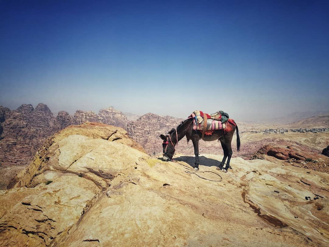 Whereever you go always have a donkey with you . #donkey #petra #jordan #discoverjordan #fluff  Whereever you go always have a donkey with you . #donkey #petra #jordan #discoverjordan #fluff #panoramic #travel #traveling #dnescestujem #exploring #neverstopexploring #adventure #desert #sand #lostcity #nature #outdoors #hiking #valley #rocks #mountains #cestolidi #theoutbound #getaway #fotkukazdejden #girlswhohike #wanderlust #igerscz #petrajordan