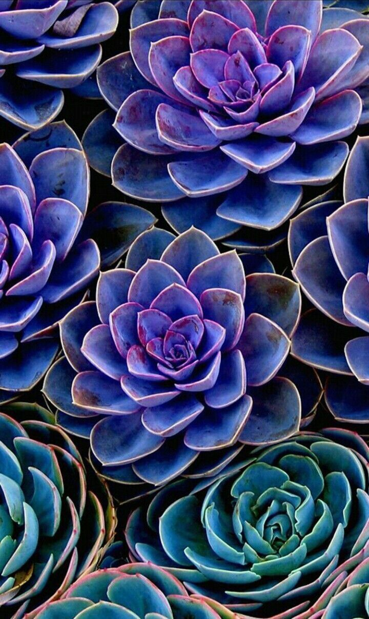 Find out the difference between succulents and cacti!! koboi What's The Difference Between Succulents And Cacti? (llustraited Guide)| Succulents Network