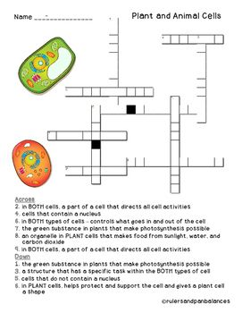 Plant And Animal Cells Vocabulary Crossword Puzzle Freebie