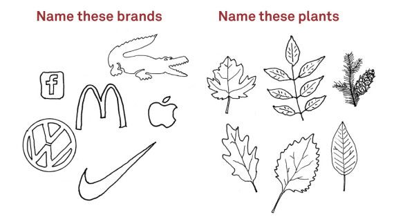 Name These Plants/Brands