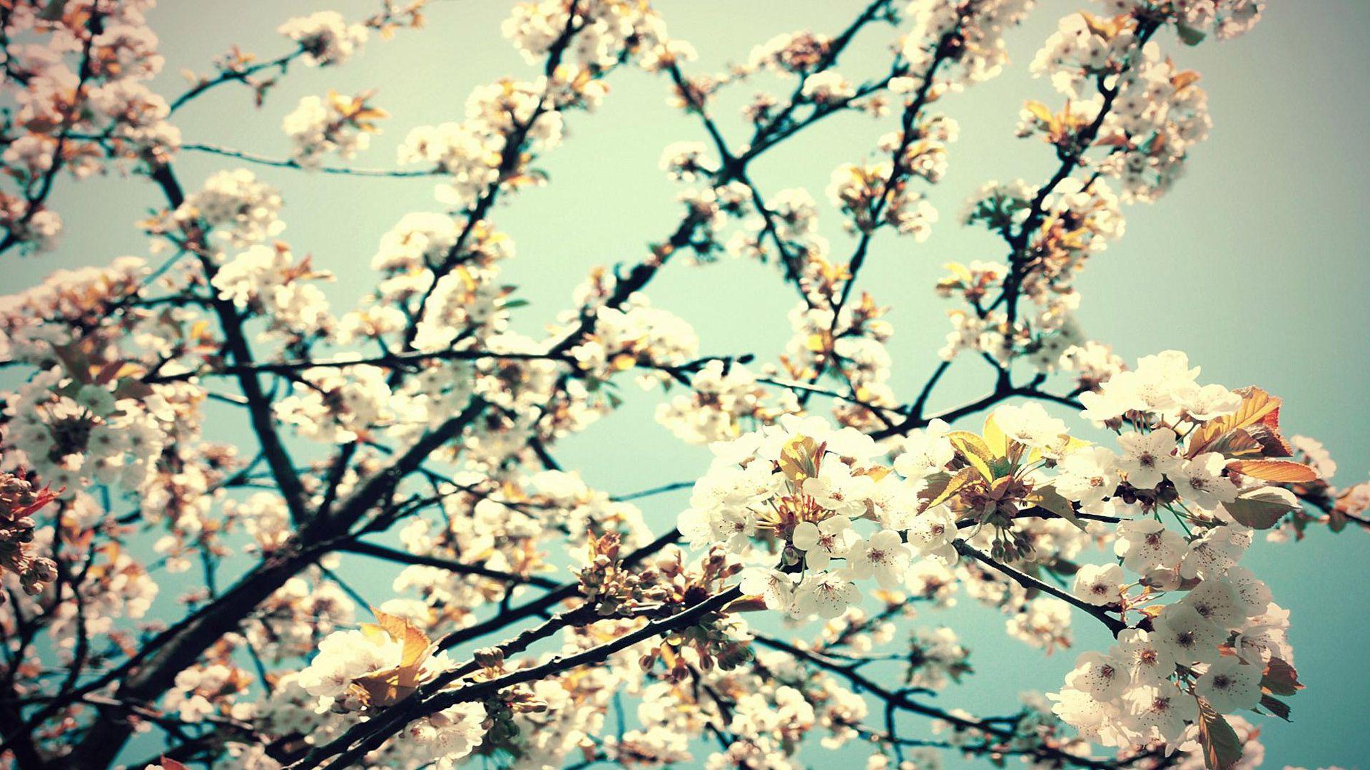 Imagenes De Fondo Flores Para Pantalla Hd 2: Wallpapers De Flores Tumblr Para Fondo De Pantalla En Hd