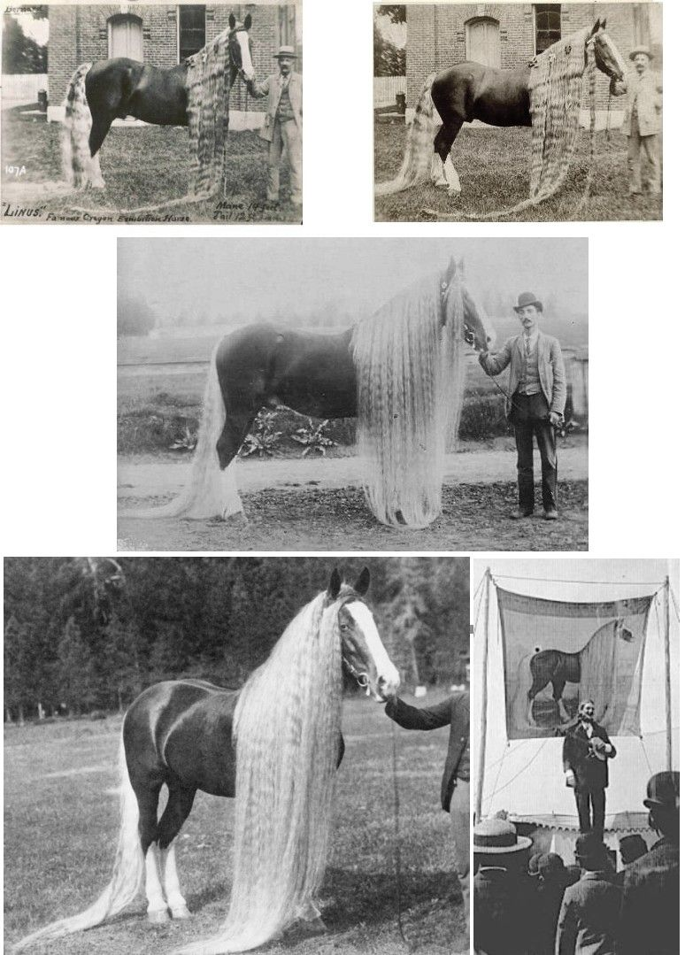 HORSES with ridiculously long manes and tails. Odd stories of them being dragged around to circuses and world fairs. I guess when you didn't have reality tv, you had to do something? lol