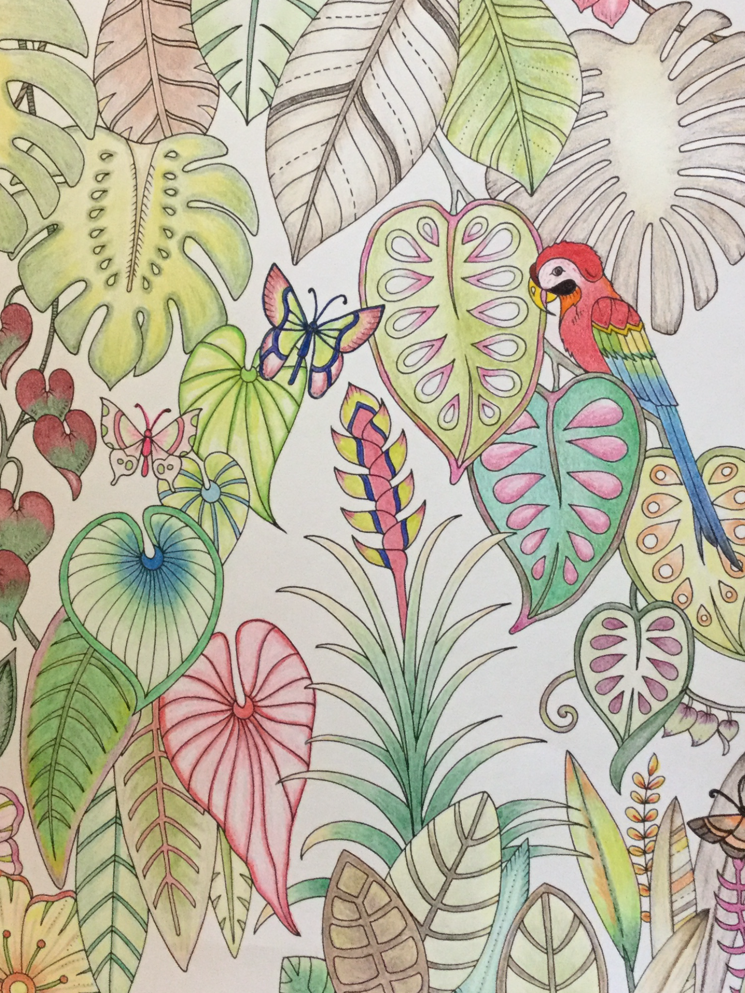 Macaw And Butterflies From Johanna Basfords Magical Jungle