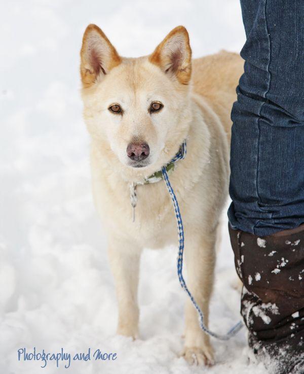 Photography And More Husky Husky Lab Mixes Pet Photographer