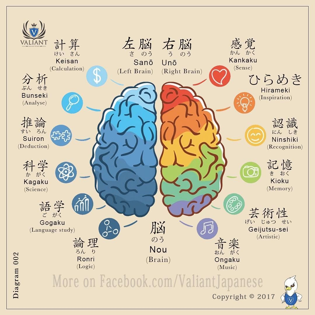 Japanese Vocabulary Diagram: Brain Works 🤓💡. . . . . . . . #jlpt ...