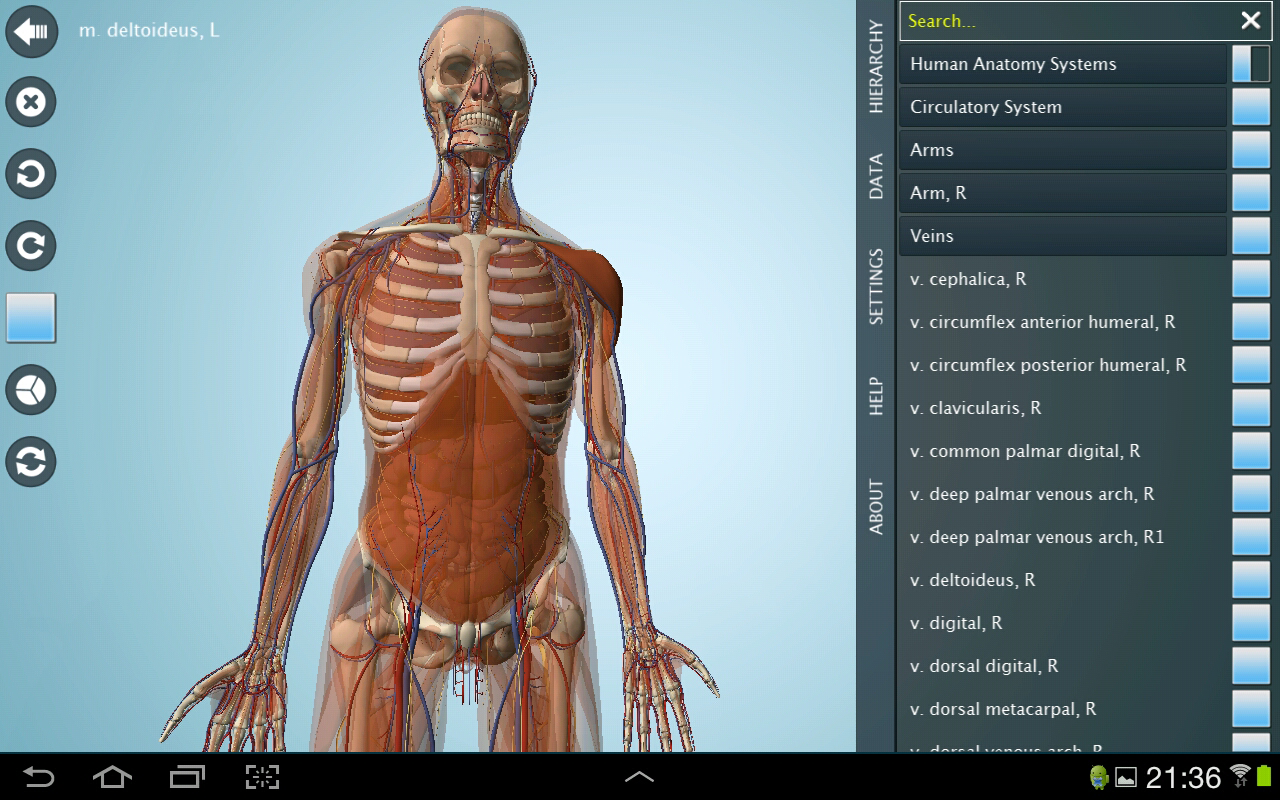 Excelente Modelos Gratuitas Anatomía 3d Elaboración - Imágenes de ...