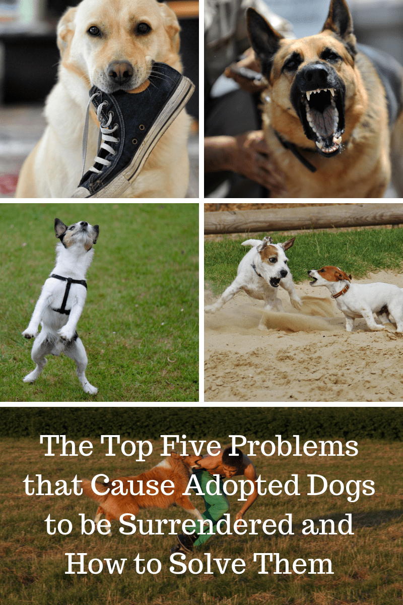 Solutions To The Top 5 Problem Behaviors People Surrender Their
