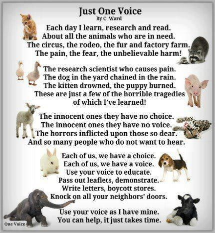 please animal rights animals the voice