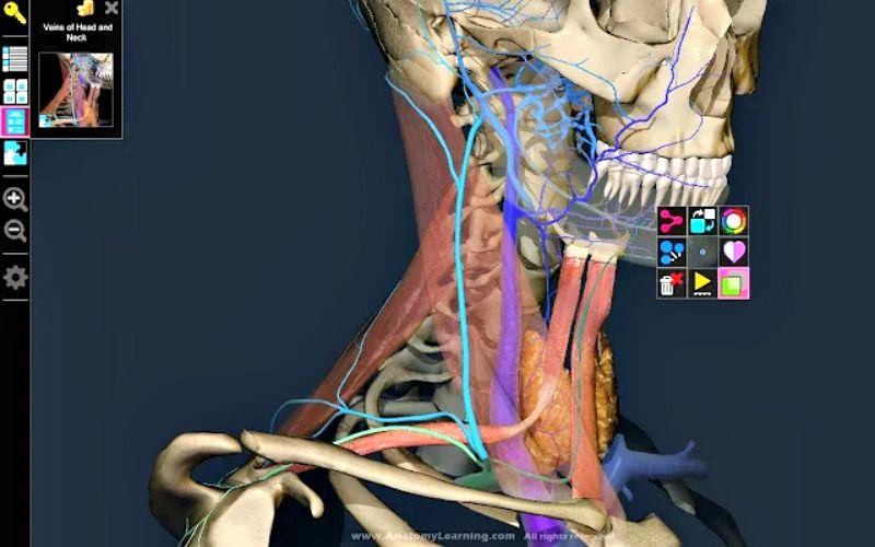 3d Anatomy Learning App Chrome Para Conocer La Anatoma Humana