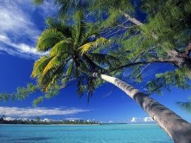 Palm Tree Society Island Beach (click to view)