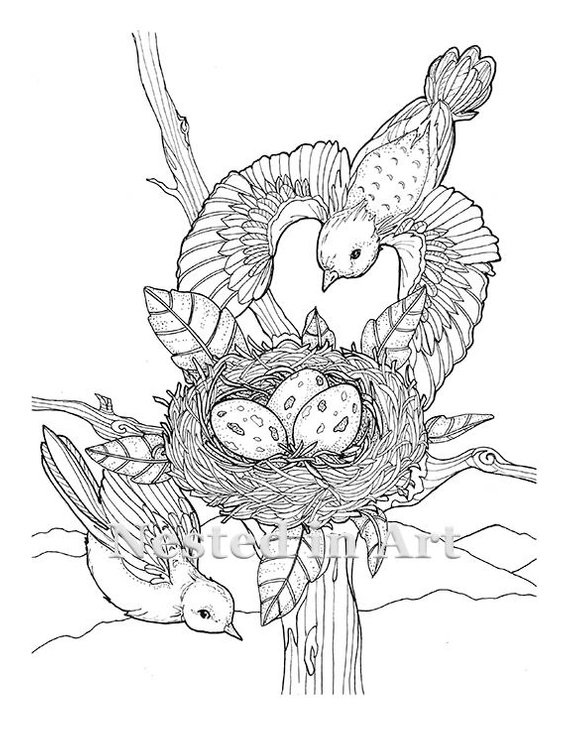 Adult Coloring Page 2 Birds Flying With Nest Digital Download
