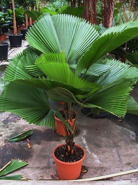 Newest Free of Charge Tropical Garden plants Popular Its no surprise why many people want hawaiian isle garden When you hear someone referring to a y