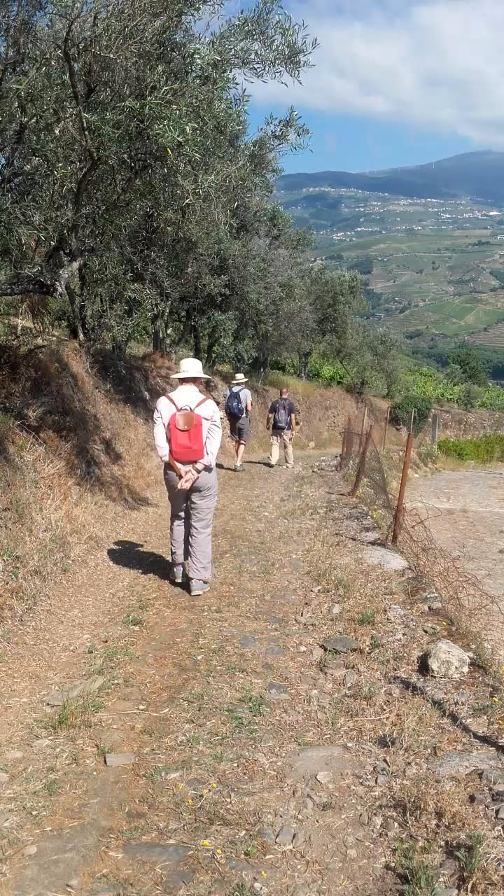 Hike in the Douro Valley. One Day itinerary with local guide, lunch and Port wine tasting. #winetravel #portwine #DouroValley #winelovers #winetasting #ilovedouro #winetours #douro #duoro #douroriver #ilovedourowines #dourowine #portugalwine #fortifiedwine #tawnyport #PortWine #VinhoPorto