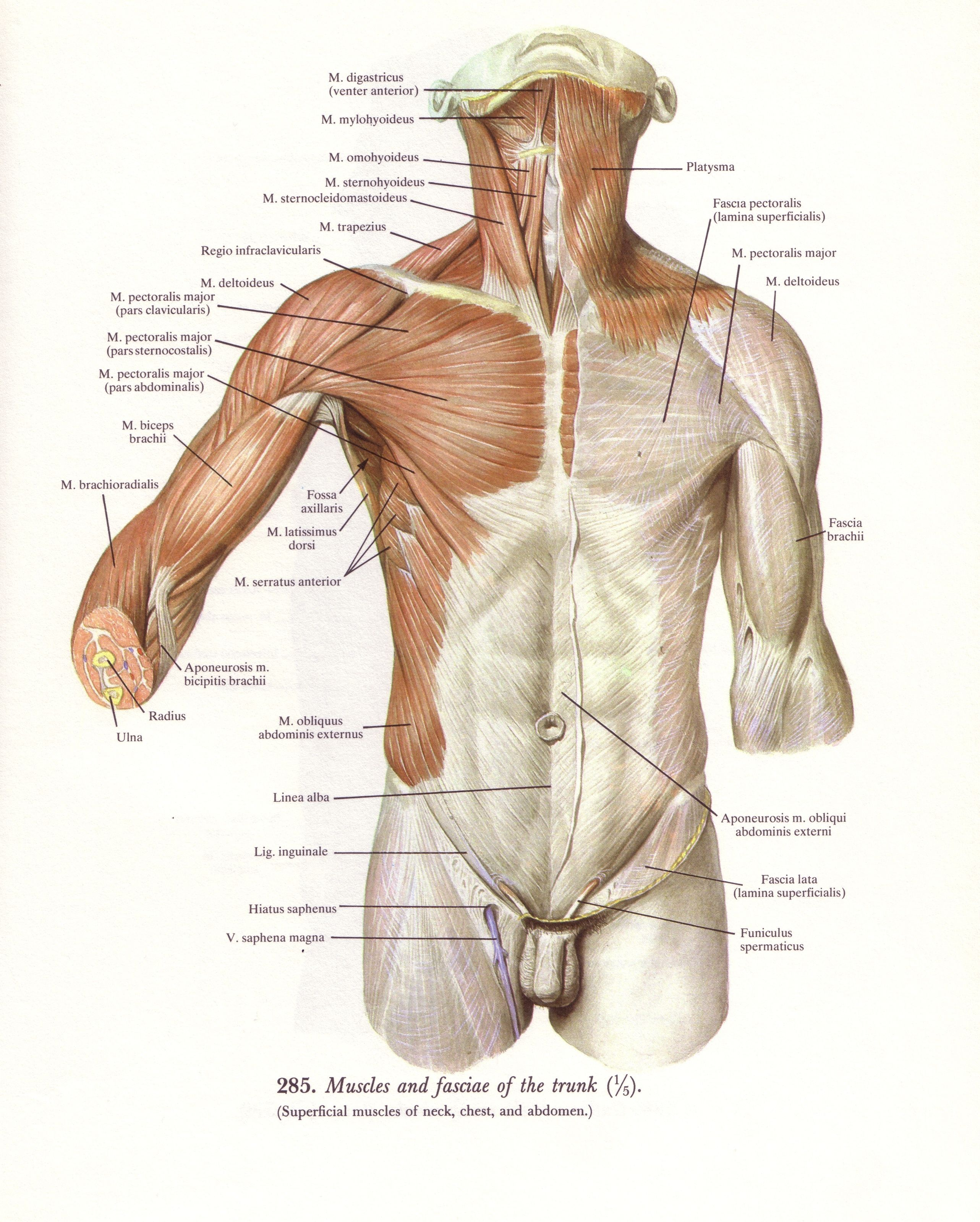 Thorax   Rolfing Session 1   Pinterest