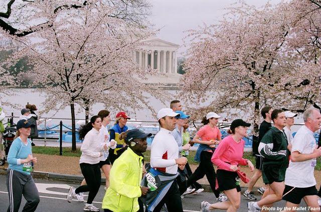 The 30 Before 30 Project Cherry Blossom 10 Mile Run Cherry Blossom Cherry Blossom Festival Blossom