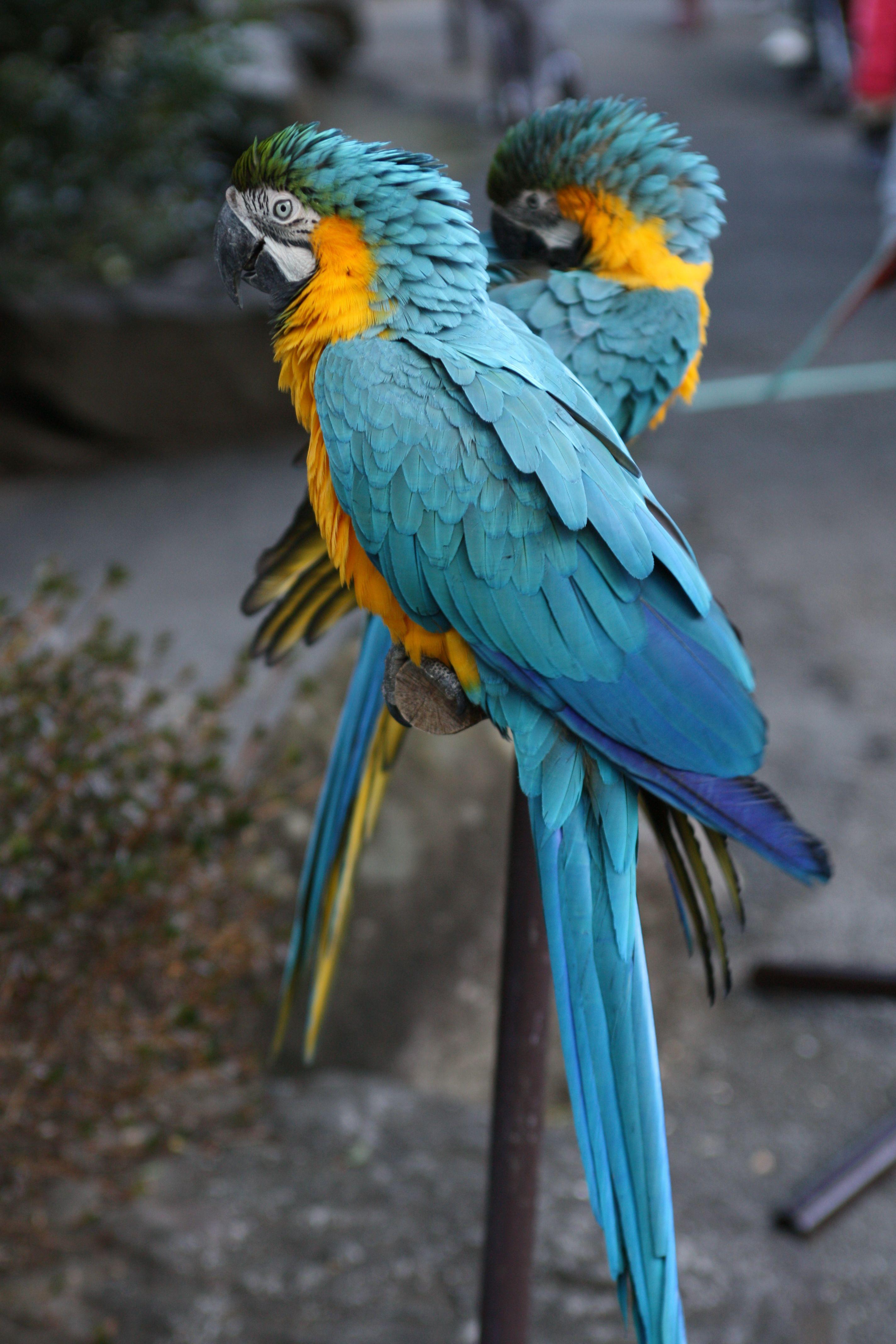 ปักพินโดย Du Sit ใน 鳥 นก