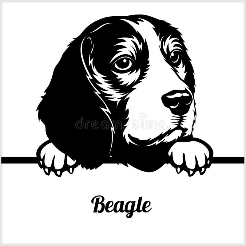 Beagle - Peeking Dogs - - Breed Face Head Isolated