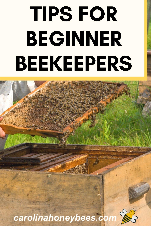 9 Great Beekeeping Tips for Beginners- Carolina Honeybees ...