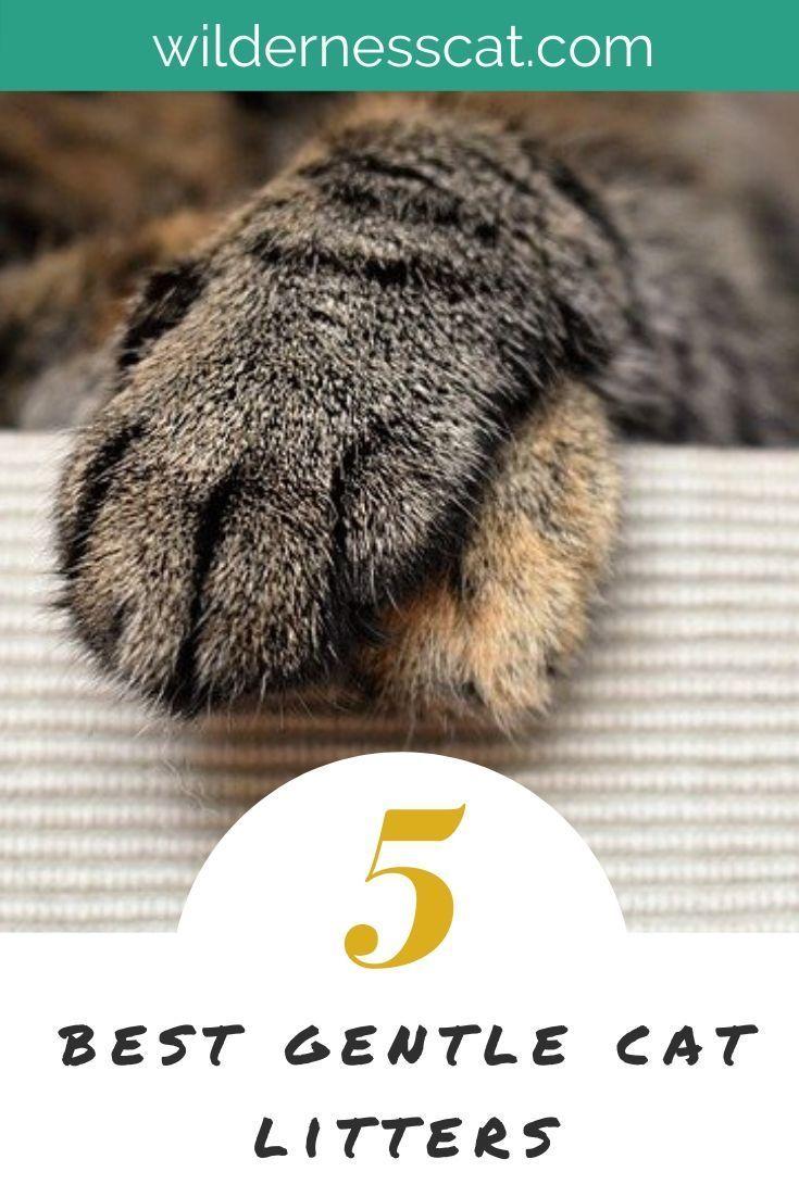 Park Art|My WordPress Blog_Garfield Cat Litter Ultimate Clump