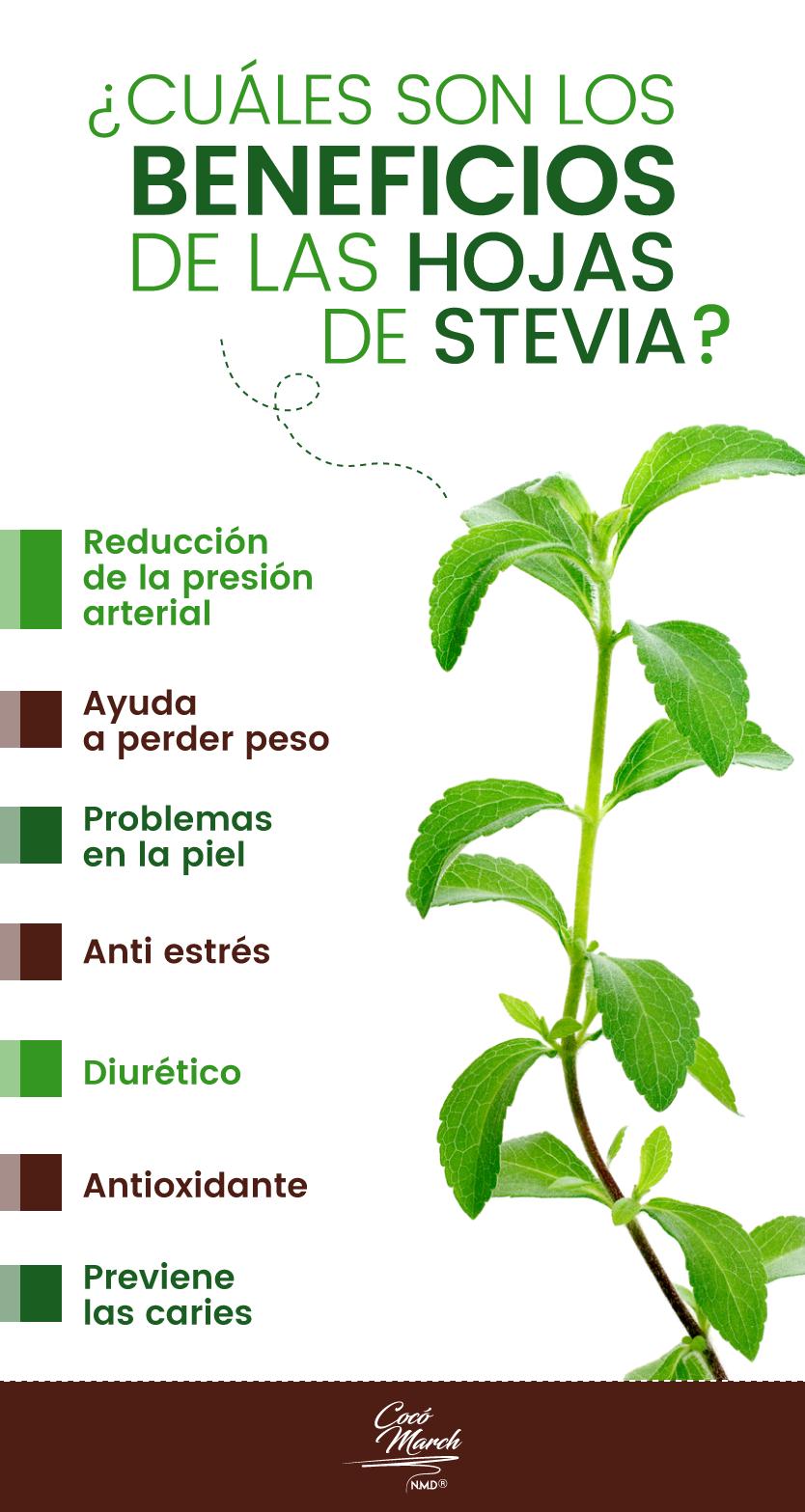 Planta stevia para bajar de peso