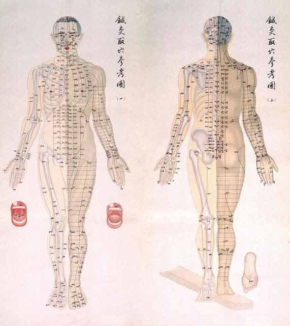 Chinese chart of acupuncture points on  male body with bones are depicted half his and muscles the other noted also best flyer inspiration images japan travel rh pinterest
